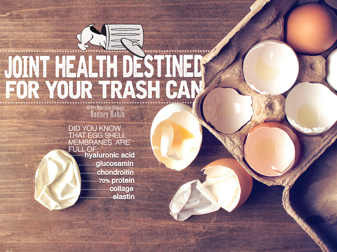 Joint health archives planet paws before tossing out your eggshells you may want to consider the following first forumfinder Choice Image