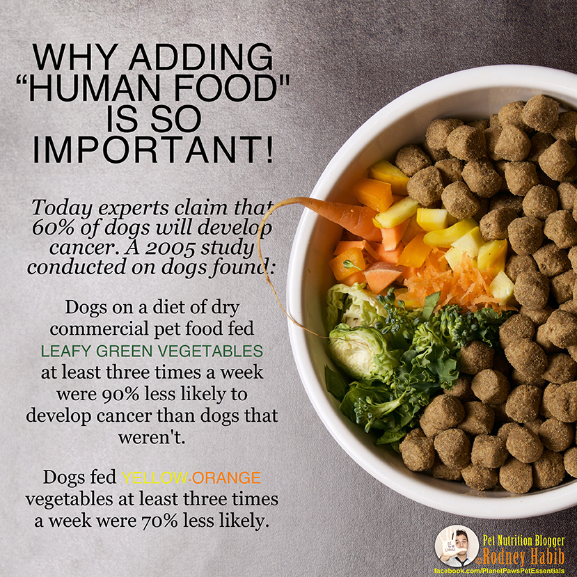 Is Raw Food Good For Dogs With Cancer