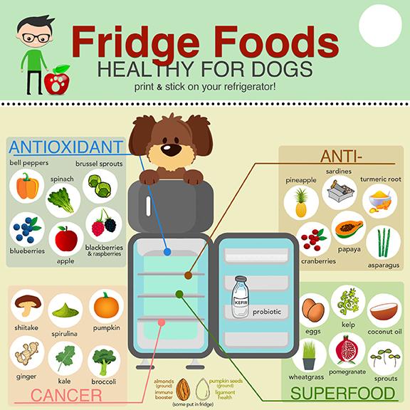 Fridge Foods Planet Paws