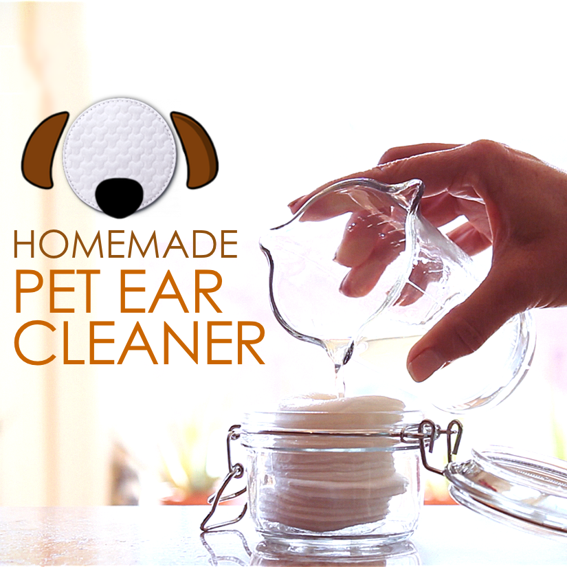 Homemade Dog Ear Cleaner Recipes